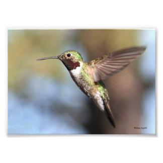 Hummingbird Pause Photographic Print