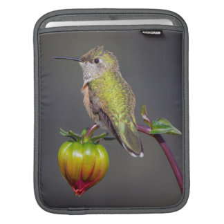 Hummingbird rests on flower bud sleeves for iPads