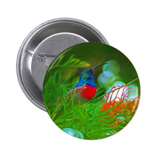 Hummingbird ruby throated buttons