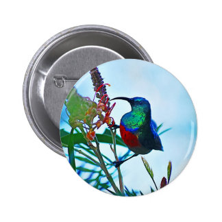 Hummingbird ruby throated pins