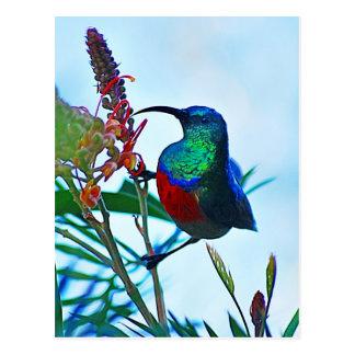 Hummingbird ruby throated postcards