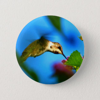 Hummingbird Sipping 6 Cm Round Badge