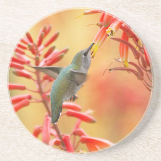 Hummingbird surrounded by red yucca coaster