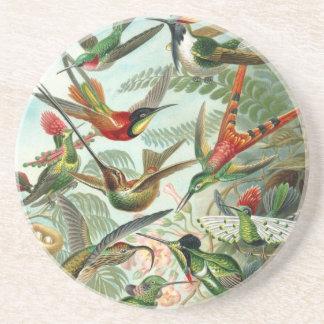 Hummingbird (Trochilidae) by Haeckel Coaster