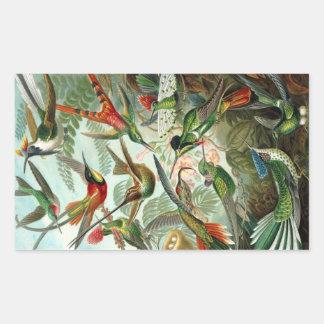 Hummingbird (Trochilidae) by Haeckel Rectangle Sti Rectangular Sticker