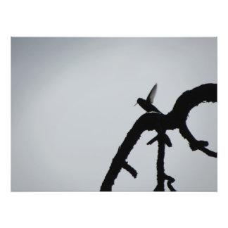 Hummingbird Wings Photo