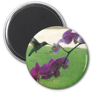 Hummingbird with Orchid 6 Cm Round Magnet