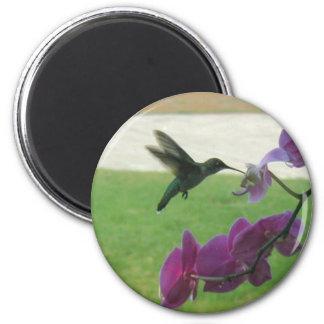 Hummingbird with Orchid Fridge Magnet