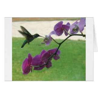 Hummingbird with Orchid Greeting Cards