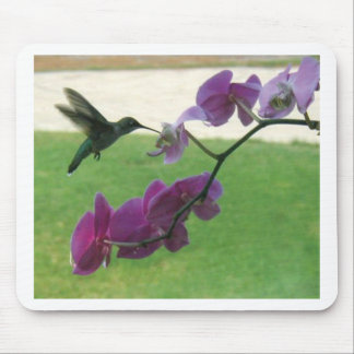 Hummingbird with Orchid Mouse Pad