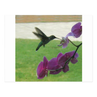 Hummingbird with Orchid Postcard