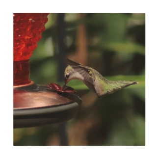 Hummingbird, Wood Print. Wood Wall Art