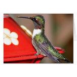 Hummingbirds 2004-0146a cards