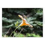 Hummingbirds 2005-0823 greeting cards