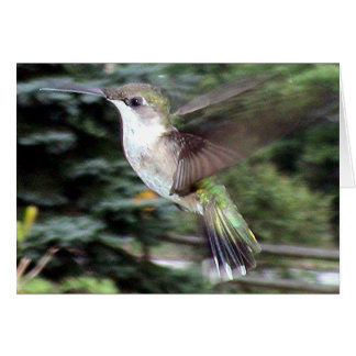 Hummingbirds 2005-0910 card
