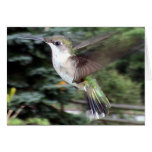 Hummingbirds 2005-0910 greeting card