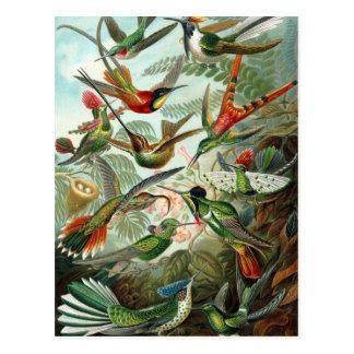 Hummingbirds by Ernst Haeckel, Vintage Birds Trees Postcard