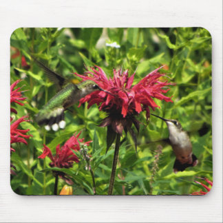 Hummingbirds Love Red Bee Balm! Mouse Pad
