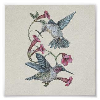 Hummingbirds & Vine Art Photo