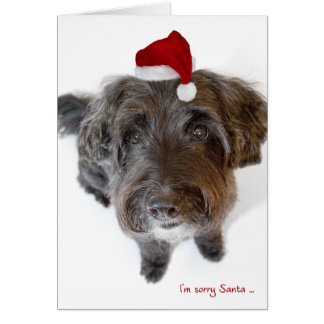 Humourous Christmas Card - Dog in Tiny Santa Hat