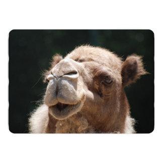 Hump Day Camel 13 Cm X 18 Cm Invitation Card