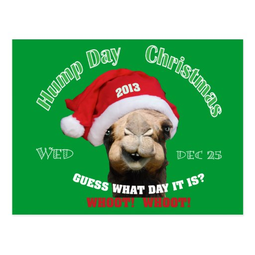 Hump Day Camel Christmas Post Cards