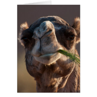 Hump Day Camel Feasting on Green Grass Note Card