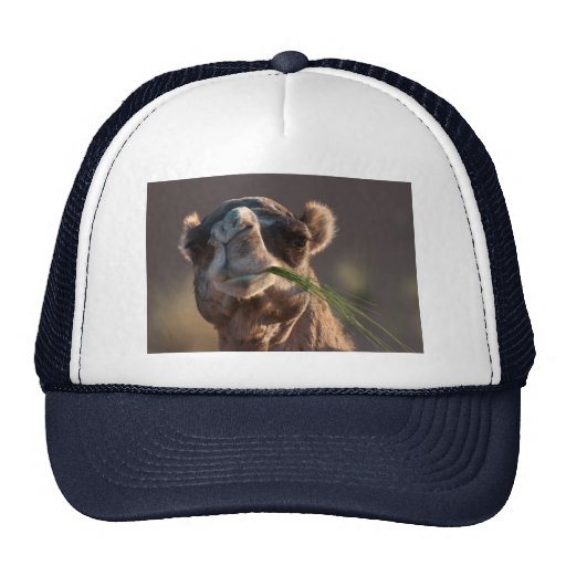 Hump Day Camel Feasting on Green Grass Hat