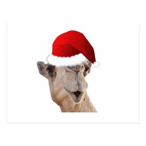 Hump Day Camel Santa Claus Hat Post Cards