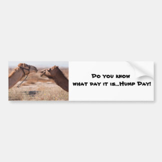 Hump Day Camels Bumper Stickers