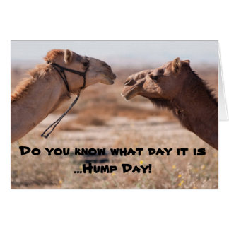 Hump Day Camels Greeting Card