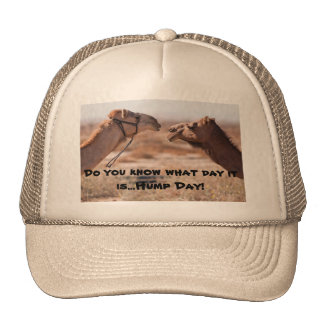 Hump Day Camels Hats