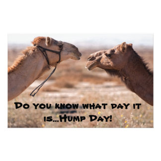 Hump Day Camels Custom Stationery
