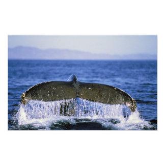 Humpback tail. art photo