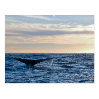 Humpback Tail Postcard
