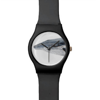 Humpback whale black watch