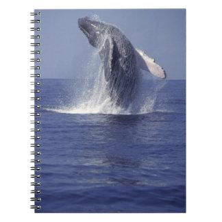 Humpback whale breaching (Megaptera Notebook