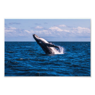Humpback Whale Breaching Photo Print