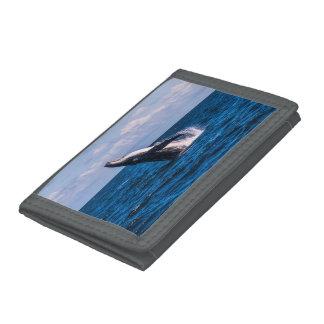 Humpback Whale Breaching Surfers Paradise Tri-fold Wallet