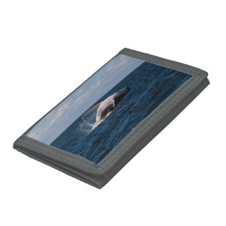Humpback Whale Breaching Surfers Paradise Tri-fold Wallets