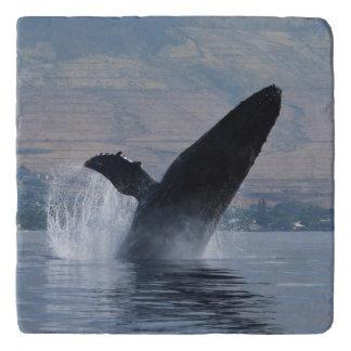 humpback whale breaching trivet