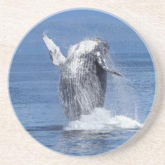 Humpback whale coaster