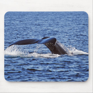 Humpback Whale Fluke, Victoria, BC Mouse Pad