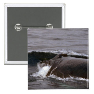 Humpback Whale Head Shot Buttons