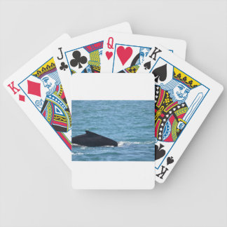 HUMPBACK WHALE MACKAY QUEENSLAND AUSTRALIA BICYCLE PLAYING CARDS