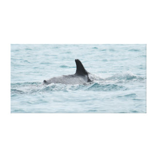 HUMPBACK WHALE QUEENSLAND AUSTRALIA CANVAS PRINT