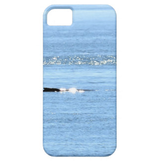 HUMPBACK WHALE QUEENSLAND AUSTRALIA iPhone 5 COVER
