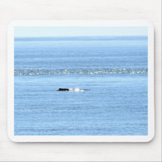 HUMPBACK WHALE QUEENSLAND AUSTRALIA MOUSE PAD
