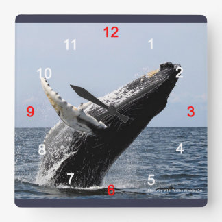 Humpback whale square wall clock