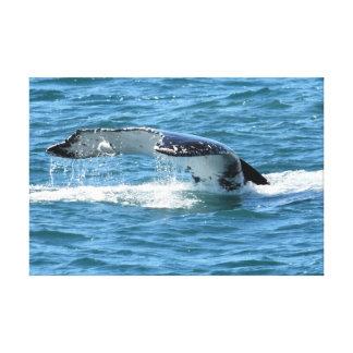 HUMPBACK WHALE TAIL & FISH QUEENSLAND AUSTRALIA CANVAS PRINT